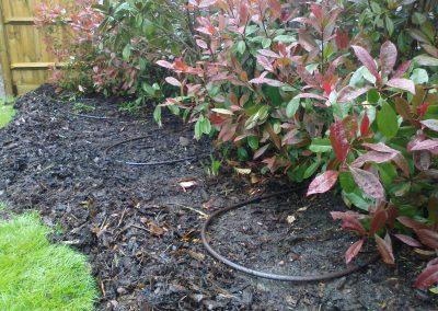Drip-install-bushes-london