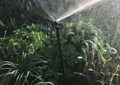 Mini-Spray-irrigation-south-west-london